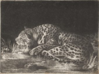 Etching Course London Fine Art Studios George Stubbs Sleeping Cheetah (A Tyger) Mezzotint 1788