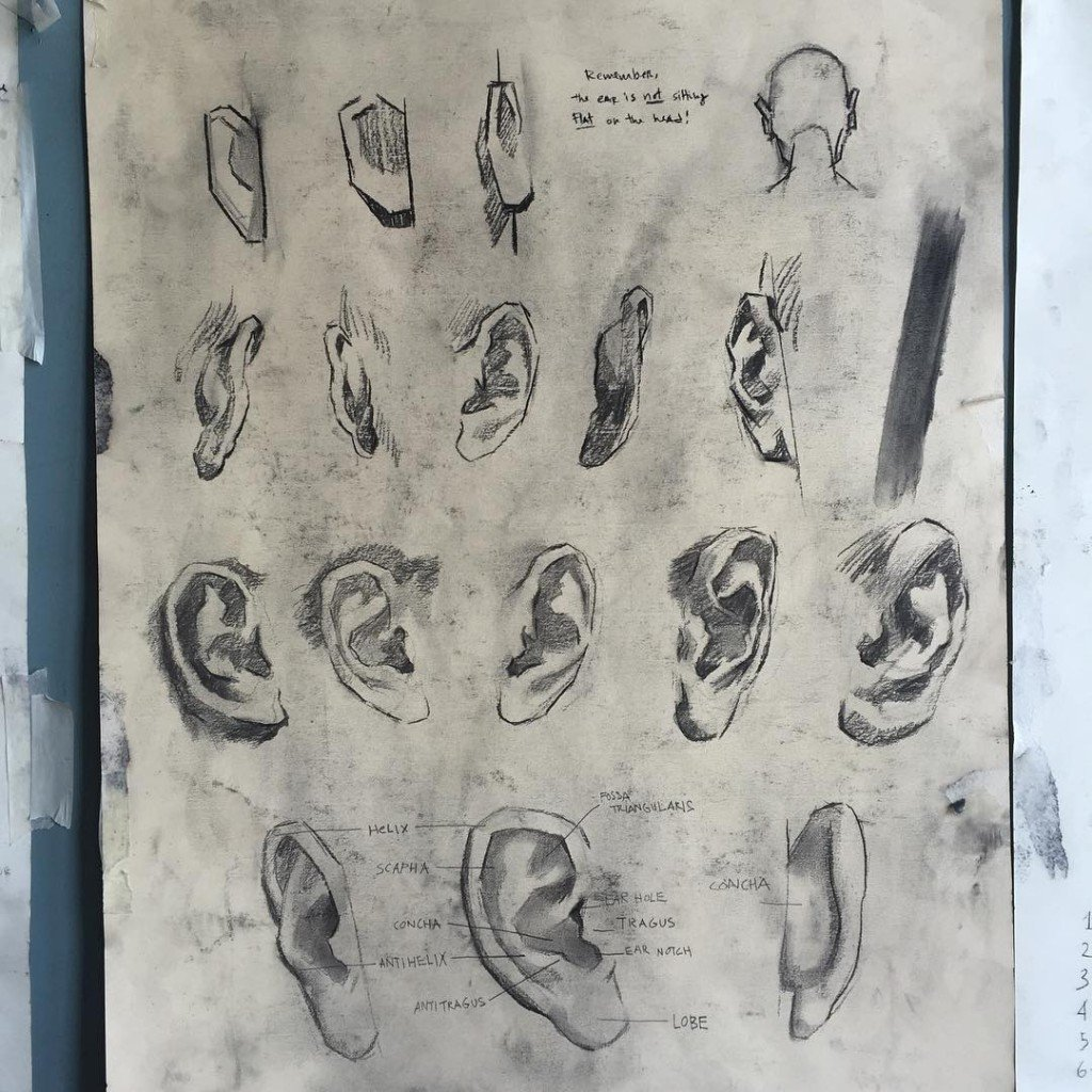 studies ear anatomy atelier london charcoal